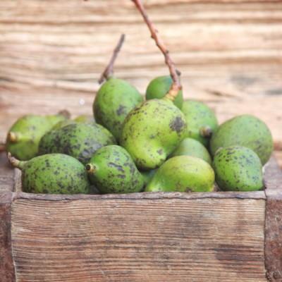 Uppu Manga Recipe – Uppilitta Kannimanga Recipe | Salted Tender Mangoes in Brine