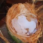 Elaneer – Karikku Mezhukkupuratti Recipe | Tender Coconut Stir Fry Recipe